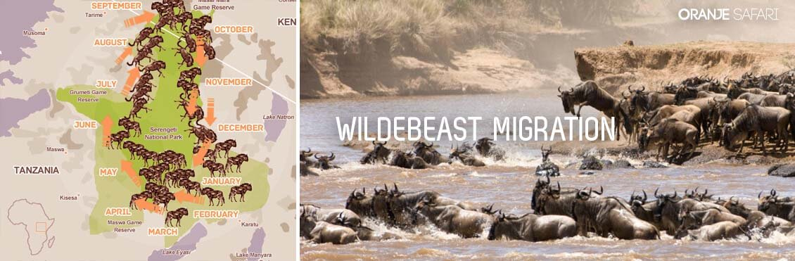 map of wildebeast migration