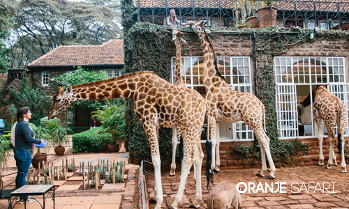 Start your Safari in your Nairobi safari hotel