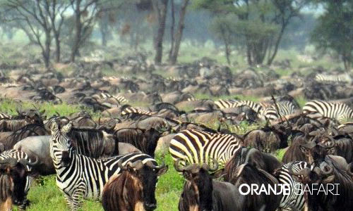 Masai Mara !