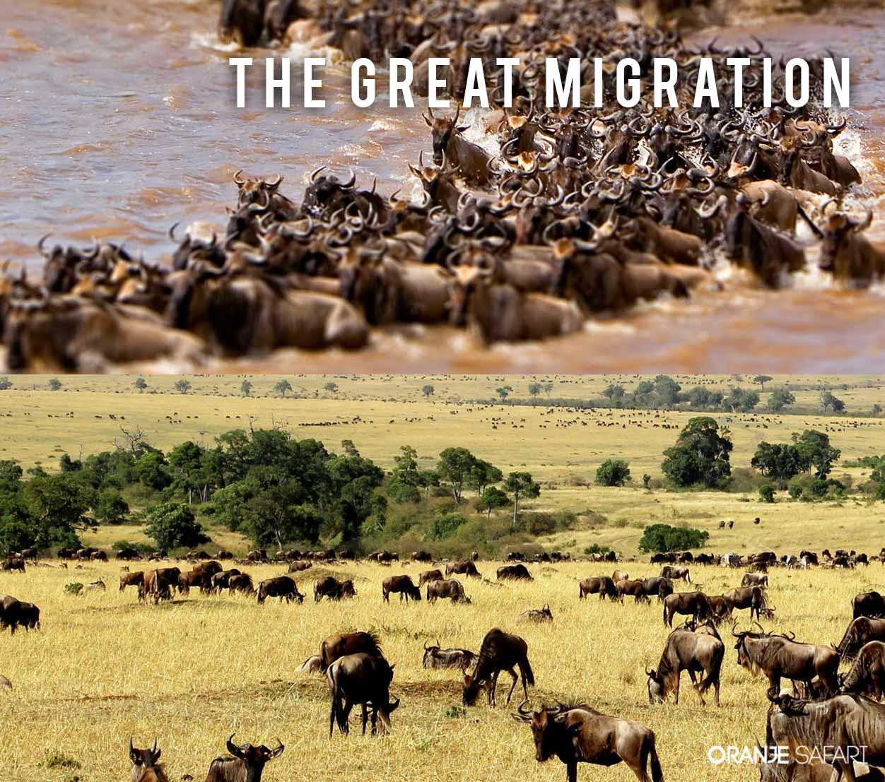 greatmigration large