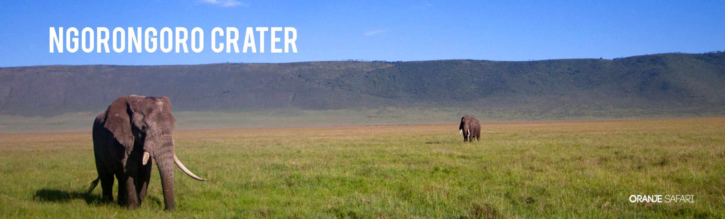 Ngorongoro Crater Safari Tanzania Tours Oranje Safari