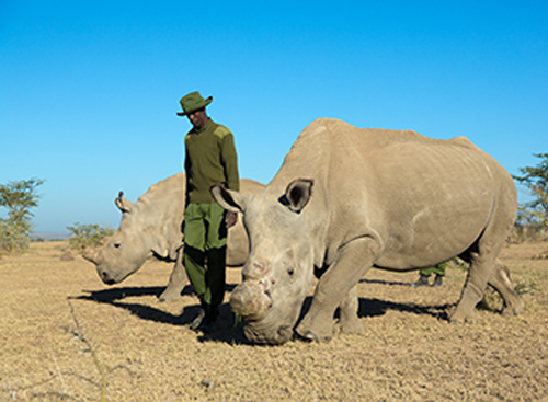 Olpejeta Conservancy